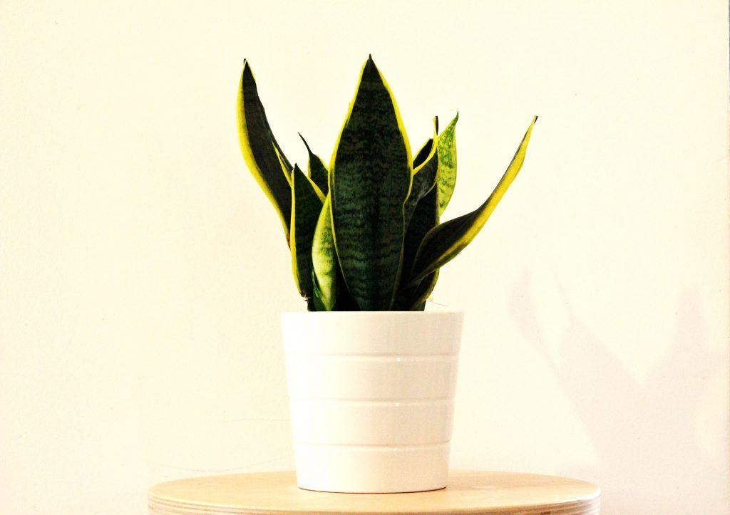 растения чист въздух